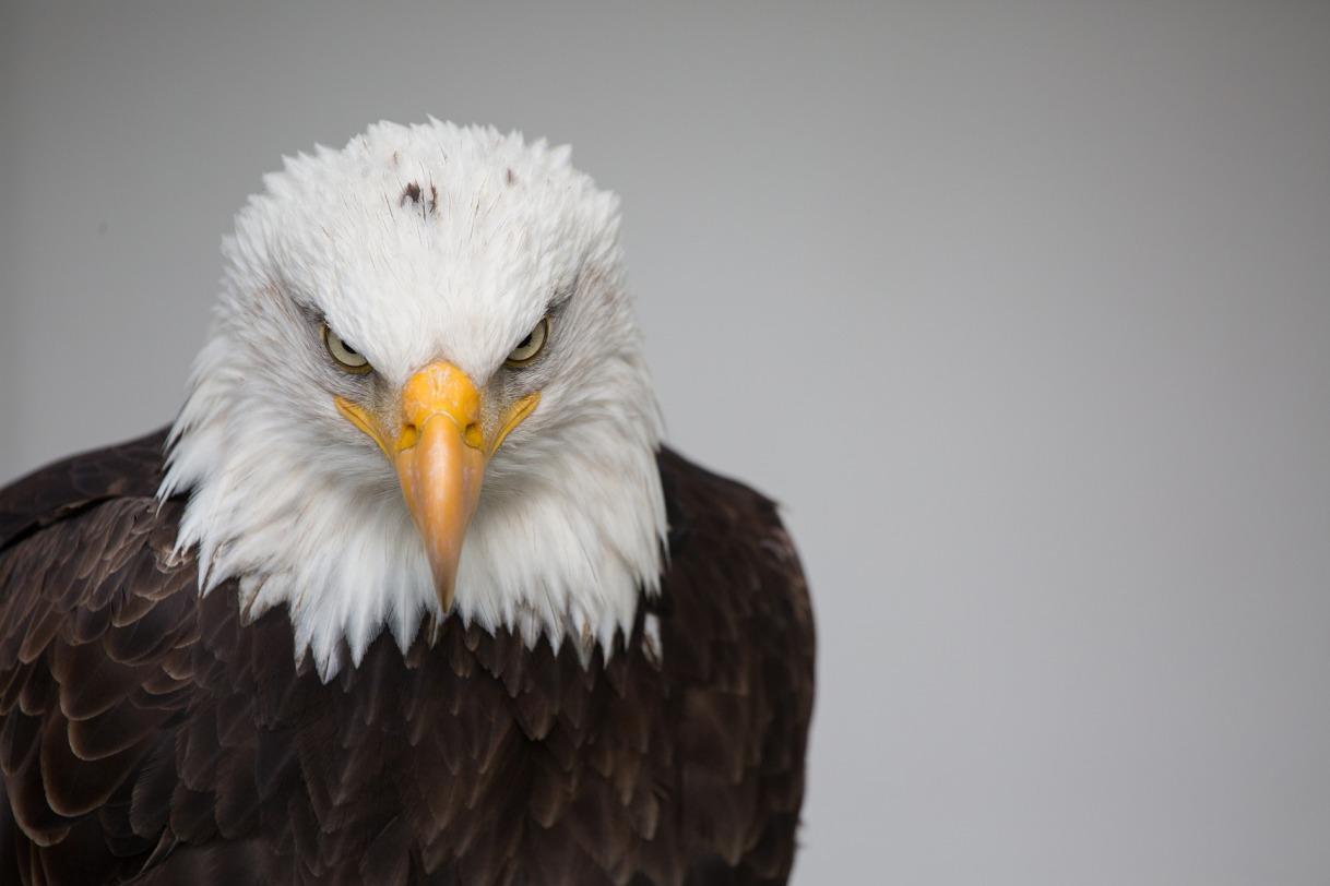 December Soaring Eagles